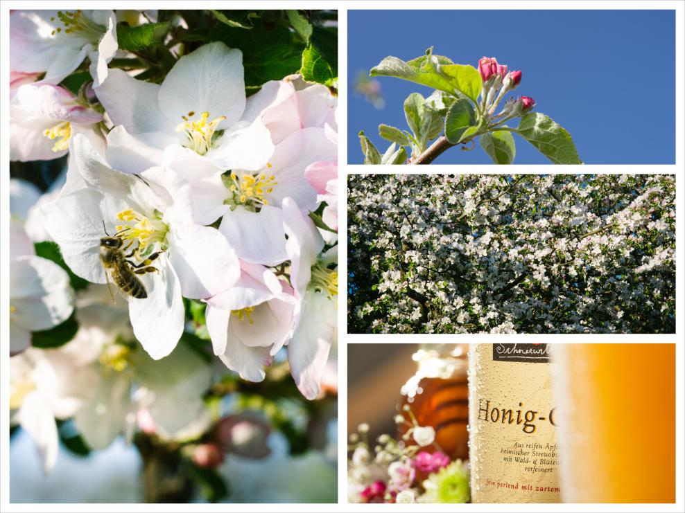 HonigCidre_0002_Collage