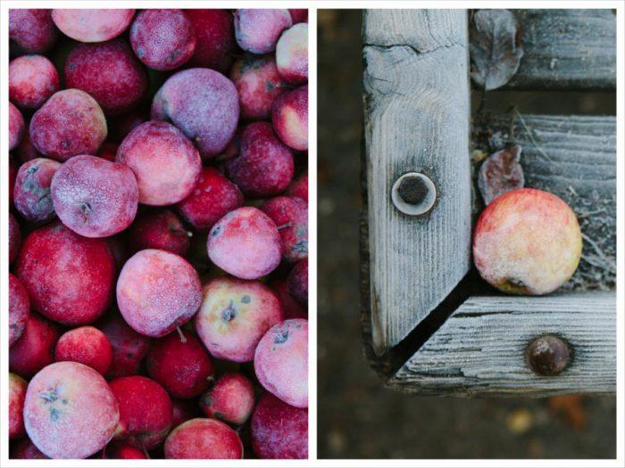Frost-Apfel