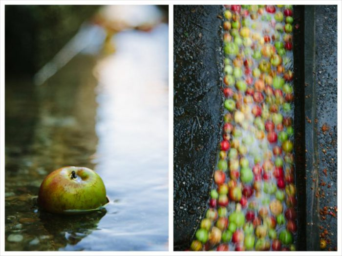 Der letzte Apfel